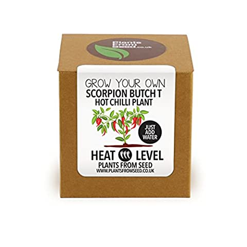 Plants From Seed Grow Your Own Scorpion Butch T Chilli
