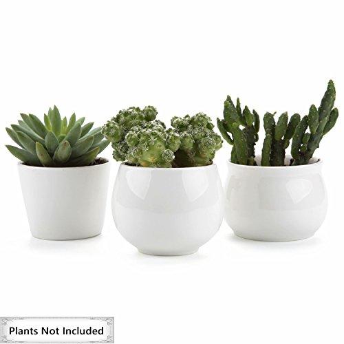 T4U 6.5/7/7CM Runde Modern Weiß Sammlung No.31 Keramik Sukkulenten Töpfe Kaktus Pflanze Töpfe Mini Blumentöpfe 3 Stücke Set