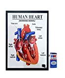 #9: Human Heart Working Model Science Project