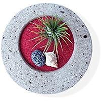 Giardino Zen Interno E Sterno Con Pianta Tillandsia Ionantha Rubra - Vaso Rotondo Di Cemento Decorativo 15 cm - Vasi Di Fiori Supporto Decorazione Beige