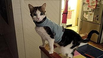 Mynwood Cat Jacket - Harnais anti-évasion pour chatons jusqu'à 8 mois - noir