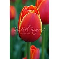 "100 Bulbos de Tulipanes""World's Favourite"" - Envío incluido"