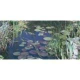 Oltre 25 Piante laghetto, 10 varietà con Ninfea + 1 Cesto piante 30x30x25 cm