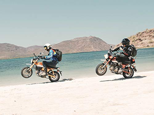 1,000 Miles in Baja on Honda Monkeys
