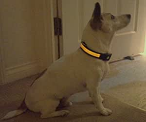 "LED Luminous Flashing Safety Dog Collar *Keep Your Dog Visible*, available in blue or yellow, small, medium or large, *N.B. for colour and size choice please click on '6 NEW' tab below. Part of the Columbia-Bookfest ""TM"" Buster products."