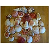 Assorted Seashells Set of 2 Bags 600g Nautical Sea Shell Seaside Decor Shabby Chic approximately 70 shells