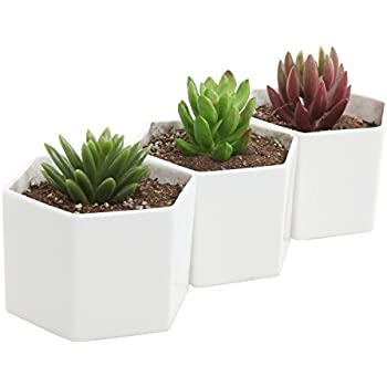 Hexagon White Ceramic Plant Pots Small Succulent
