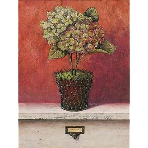 Impresión de Arte Fino en lienzo : Hortensia Study by Fisk, Arnie - Medio (57 x 75 Cms)