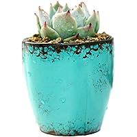Da.Wa Maceta Retro de Cerámicos Planta Contenedor para Suculento Cactus Planta Accesorios Decoración Mesa(Azul Oscuro)