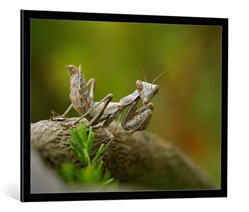 """Image encadrée: Jimmy Hoffman """"What´s up?"""" - impression d'art décorative, en cadre de haute qualité, 100x75 cm, Noir / Bord gris"""