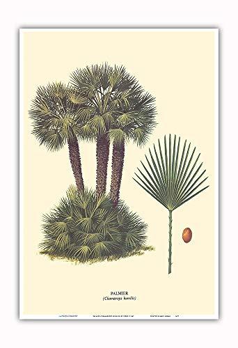 Pacifica Island Art - Zwergpalme - (Chamaerops Humilis) - Retro Botanische Illustration von Ferry c.1967 - Kunstdruck 33 x 48 cm