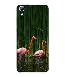 PrintVisa Couple Bird Standing In Water 3D Hard Polycarbonate Designer Back Case Cover for HTC Desire 828 Dual Sim