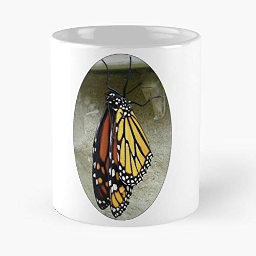 Black Bug Butterfly Chrysalis - Funny Gifts For Men And Women Gift Coffee Mug Tea Cup White-11 Oz. -