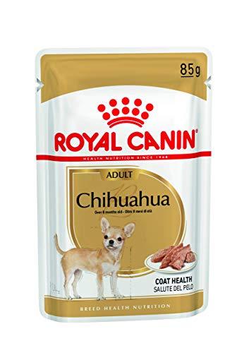 Alimentazione del Chihuahua, Guida e Consigli. Guide e Consigli per Chihuahua Informazioni