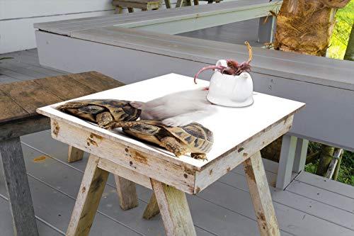 Wallario Aufkleber Selbstklebende Garten-Tisch-Decke - Katze auf Schildkröten in 100 x 100 cm