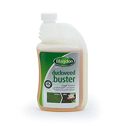 Blagdon 2766 Pond Duckweed Buster, Controls Duckweed, Safe and Natural, 1L, Treats 9,092 Litres of Pond Water 1