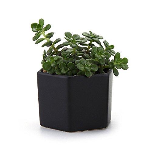 t4u-7cm-maceta-de-ceramica-de-seis-medidas-con-superficie-semibrillante-para-plantas-suculentas-cact