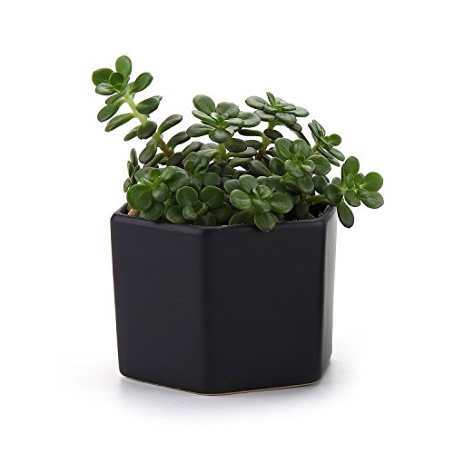 t4u-mini-esagono-lucentezza-superficiale-ceramica-vaso-di-fiori-pianta-succulente-cactus-vaso-di-fio