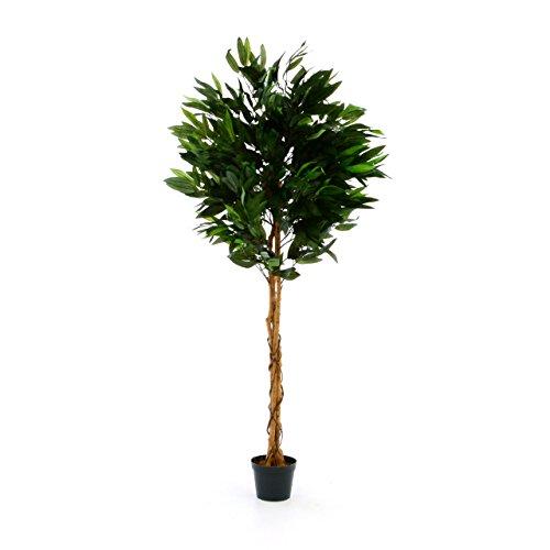Nexos Künstlicher Mango-Baum Kunstpflanze Kunstbaum mit vielen Zweigen Echtholz-Stämmen und Topf – Gesamthöhe 180 cm – grün braun