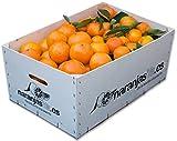 Caja de Mandarinas y Naranjas de Mesa 5 + 5 kg - Recién recolectadas