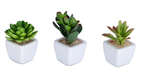 6er Set Sukkulenten B x H 4,5x9cm Kunstpflanze Grün Weiß Kunstblume Deko - 4