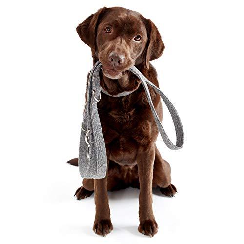 PiuPet® Hundeleine Set mit Halsband, Leine (2m) und Kotbeutelspender   Stilvolle Hunde Leine mit Hundehalsband und Hundekotbeutel Spender   Größe S/M (Halsumfang 33-40cm)