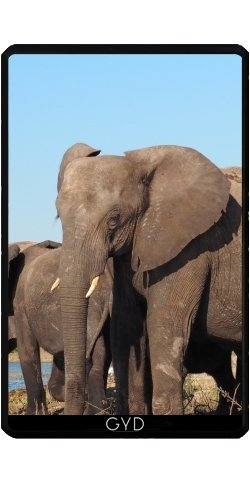 case-for-kindle-fire-7-pouces-elephant-africa-exotic-by-wonderfuldreampicture