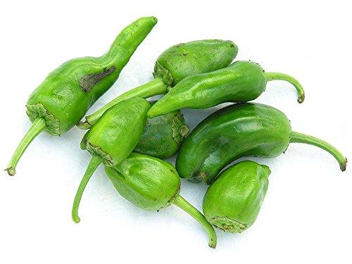 1000 Chili Samen -Pimientos de Padrón -