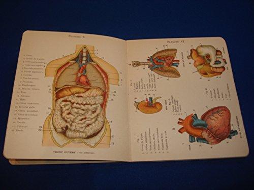 Petit Atlas D'histoire Naturelle de L'homme , Son Anatomie Élémentaire Complément De Toutes Les Histoires Naturelles Avec 12 Planches En Chromolithographie ( 8 Couleurs )