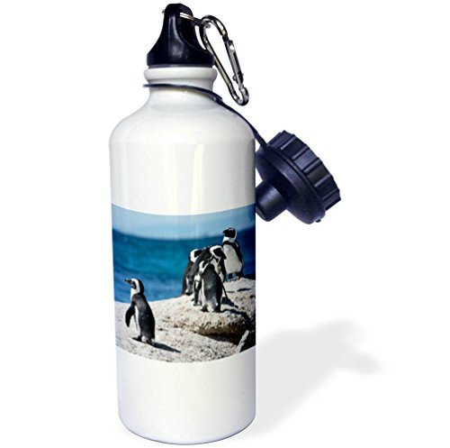 Sports Water Bottle Gift, Penguins South Africa Cape Town Boulders Beach African Penguin Colony White Stainless Steel Water Bottle for Women Men 21oz -