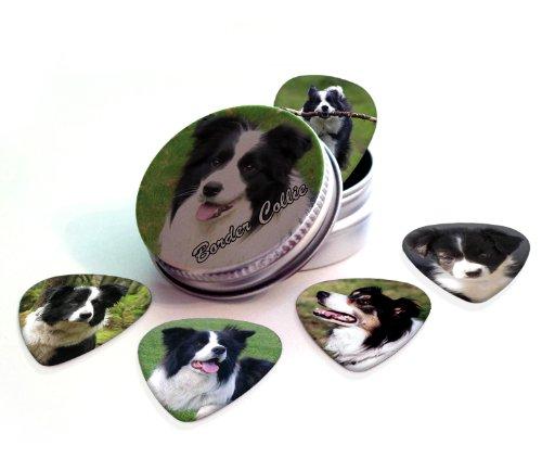 border-collie-perro-5-puas-para-guitarra-presentadas-en-una-lata