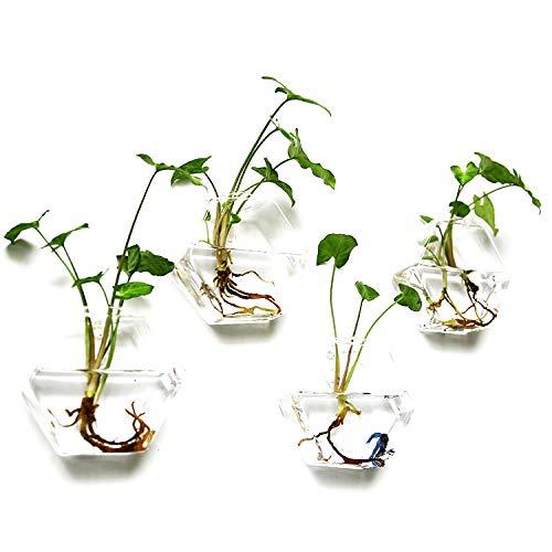 Set von 4Wand Pflanzgefäßen aus Glas zum Aufhängen Blumentöpfe Sechskant Air Pflanze Container Container Wasser Pflanzgefäß Air Pflanze Terrarien Air, 12 cm X 13 cm