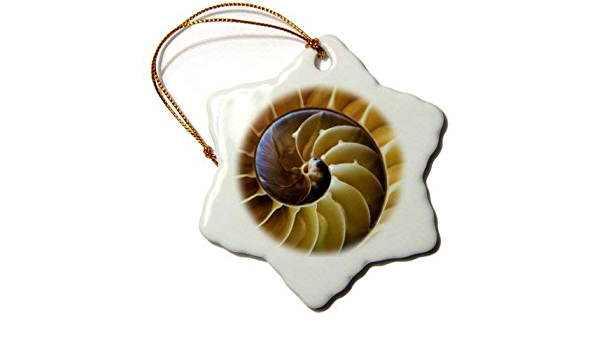 Xmas Ornament Decor Shells Usa Georgia Abstract Of A Nautilus Shell Snowflake Decorative Hanging Ornament Porcelain Amazon Co Uk Kitchen Home