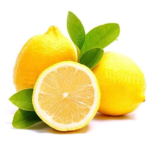 good01 20 pezzi di semi di limone rari facili da coltivare piantare giardino crescita veloce decorazione di frutta bonsai 20pcs