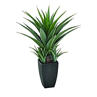Catral 53010135 Agave, 15.0×15.0x75.0 cm