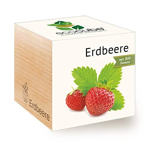Feel Green Ecocube - Semi di Fragola biologici, Idea Regalo sostenibile (100% Eco Friendly), Grow Your Own/Set di Coltivazione, Piante nel Dado di Legno, Made in Austria
