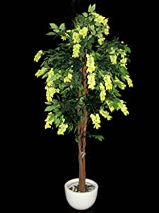 Fourwalls Wisteria Plant (Mixed Material, Yellow)