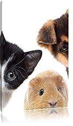 Lustiges Trio Hund Katze Meerschwein , Format: 60x80 auf hochkantiges Leinwand, XXL riesige Bilder fertig gerahmt mit Keilrahmen, Kunstdruck auf Wandbild mit Rahmen, günstiger als Gemälde oder Ölbild, kein Poster oder Plakat