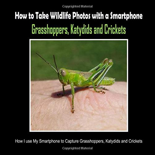 Grasshoppers, Katydids and Crickets: How I Use My Smartphone to Capture Grasshoppers, Katydids and Crickets (How to Take Wildlife Photos with a Smartphone, Band 7) Samsung Cricket