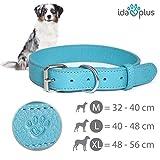 Ida Plus – Hunde-Halsband aus Leder mit silberner Schließe für große und Kleine Hunde (XL – 48-56 cm Durchmesser)