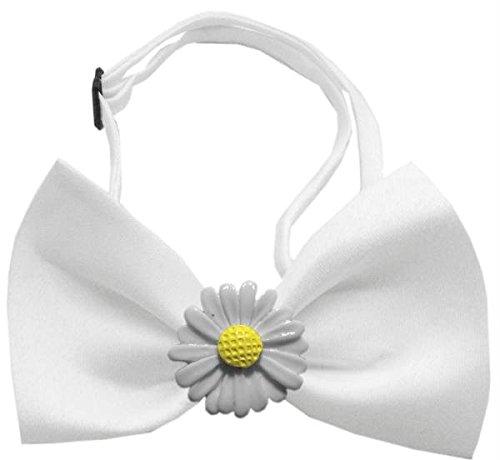 White Daisies Chipper White Bow ()
