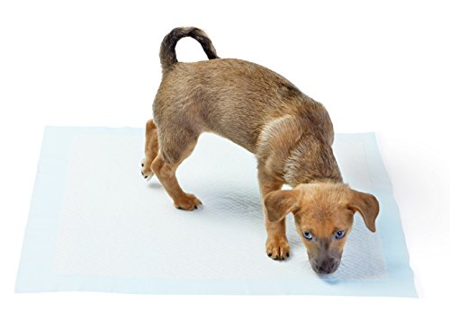 AmazonBasics Puppy Pads Trainingsunterlagen für Welpen, Standardgröße, 100 Stück - 2