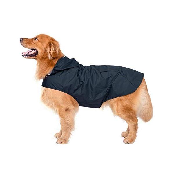 Zellar Dog Raincoat 2