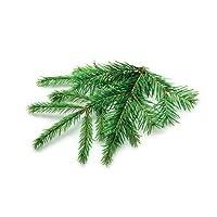 Perchè non far crescere degli alberi nel tuo Smart Garden? Inizia con il maestoso abete rosso. Con questo albero storico nel tuo giardino, sperimenterai la meraviglia di vedere nascere un albero. Presente sulla Terra da 136 milioni di anni, l'abete r...