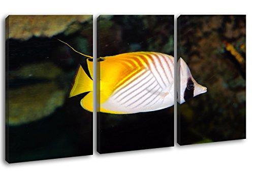 deyoli Dark entzückender Zierfisch im Format: 3-teilig 120x80 als Leinwandbild, Motiv fertig gerahmt auf Echtholzrahmen, Hochwertiger Digitaldruck mit Rahmen, Kein Poster oder Plakat