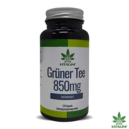 VITAL24 - Grüner Tee Extrakt Kapseln - 120 hochdosierte Grüntee Kapseln - beliebt in Definitions-Phase & Diät - Hohe Antioxidative Grünen Tee
