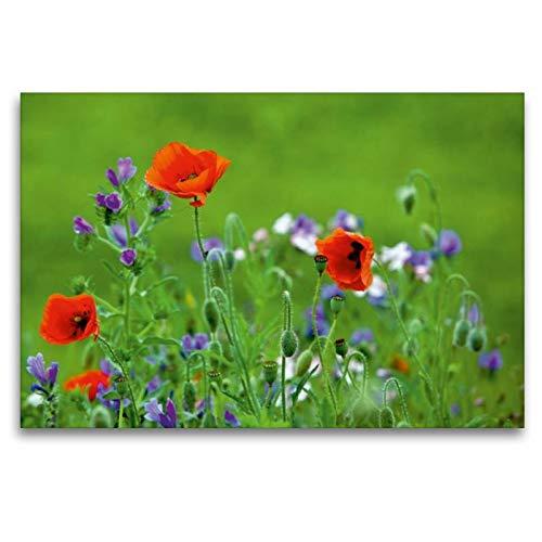 calvendo natur - tela in tessuto di alta qualità, 120 x 80 cm orizzontale, con immagine di aiuole fiorite, su tela