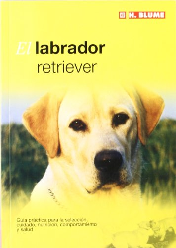 El labrador retriever (Mascotas)