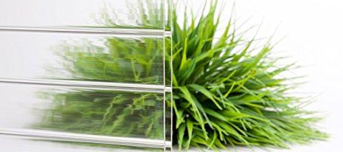 Stegplatte | Hohlkammerplatte | Doppelstegplatte | Material Acrylglas | Breite 980 mm | Stärke 16 mm | Farbe Glasklar | Breitkammer
