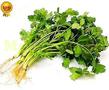 Vista 1 Sac = 100 pcs Vente Chaude JAPONAIS Graines De Coriandre Persil Bonsaï Tomate Cerise Légumes Bio Graines Maison & Jardin